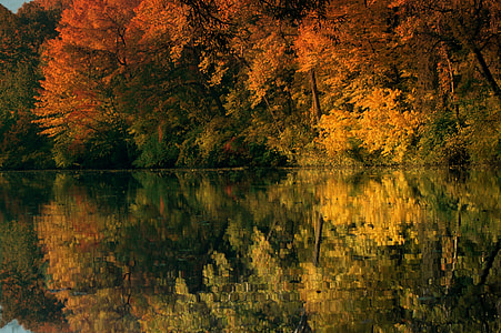 autumn leaf trees reflecting body of water