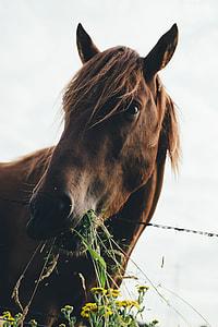 horse eating plants macro photography