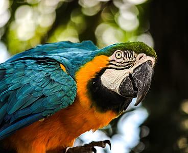 closeup photo of macaw