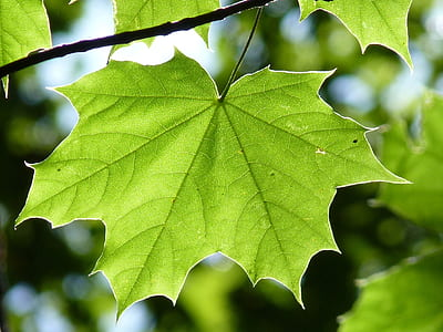 green leaf in branch