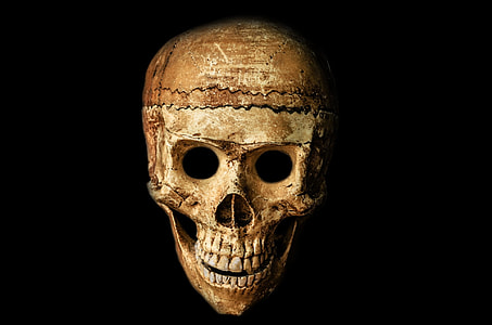 human brown skull
