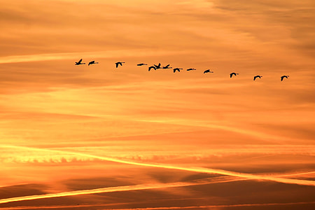 flock of birds flying under the clouds during golden hour