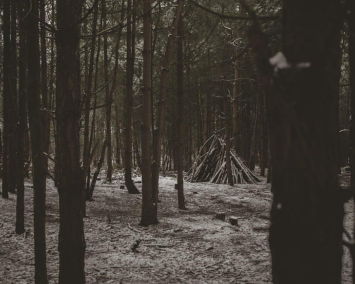 wood tent at the middle of the woods