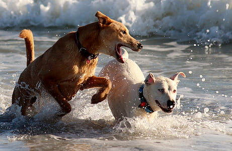 brown and white dogs in the body of water