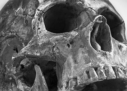 grayscale photo of human skull