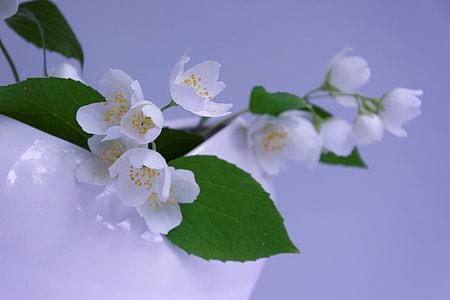 bunch of white petal flower