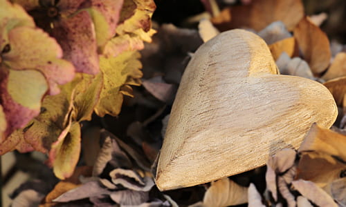 carved heart on dried leaves