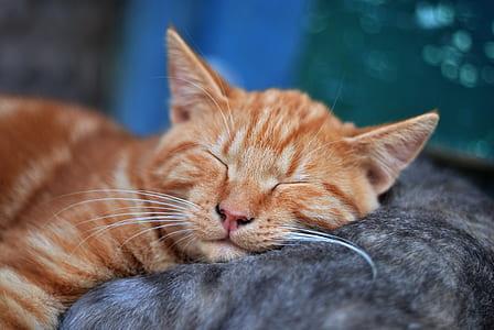 orange cat on black cat