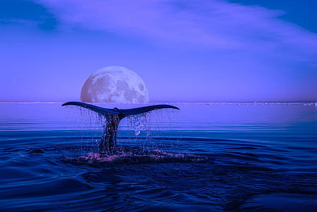 photo of whale tail during nighttime