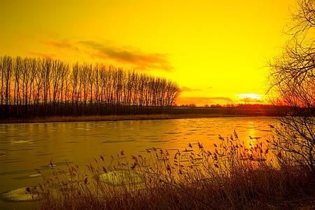 leafless trees beside body of water