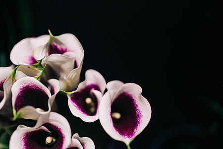 Close-ups of flowers and plants
