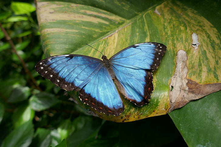 blue and black butterfly on top of green leaf at daytime