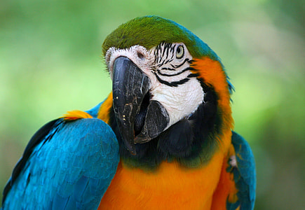 close-up photo of green-and-blue macaw