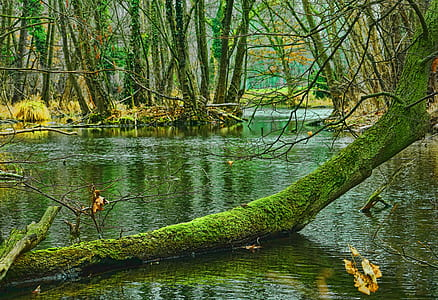 green tree branch on body of water