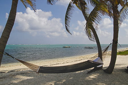 green hammock tied on coconut trees during daytime