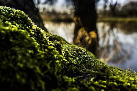 Shallow Focus of Green Moss