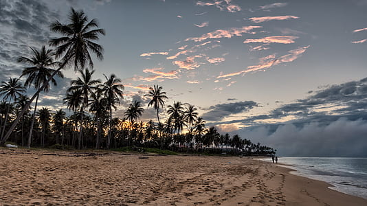 coconut trees near the ocean
