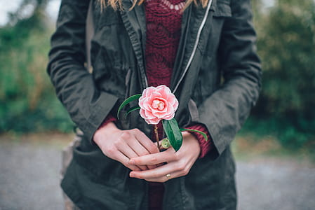 person holding pink rose