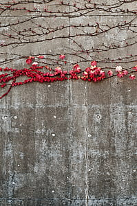 red petal flower plant on concrete wall