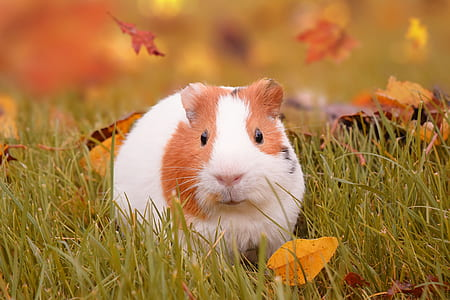 hamster on green grass field
