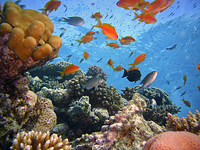 photo of assorted fish under the sea