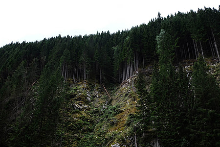 photography of green trees on mountain