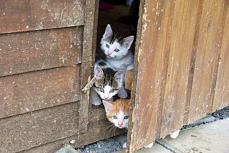 three tabby kittens peeking on door