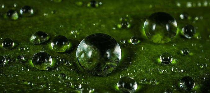 micro photo of dew drops on leaf