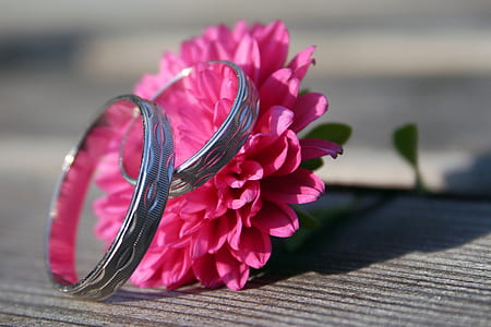 pair of silver-colored wedding band and pink chrysanthemum flower