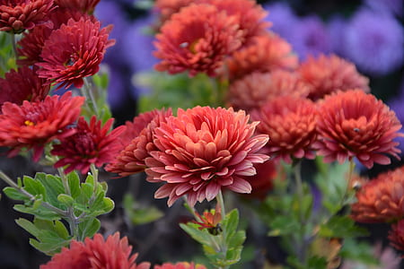 macro shot photography of red flowers