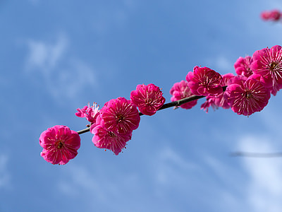 photo of pink flowers on branch