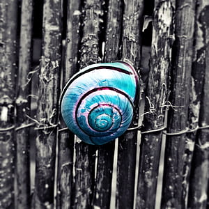 selective color photography of blue snail shell on gray fence