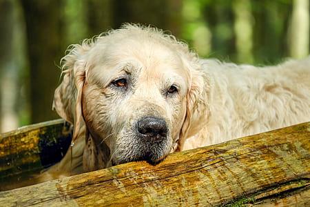wet golden retriever beside tree trunk