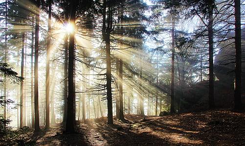sun rays on trees