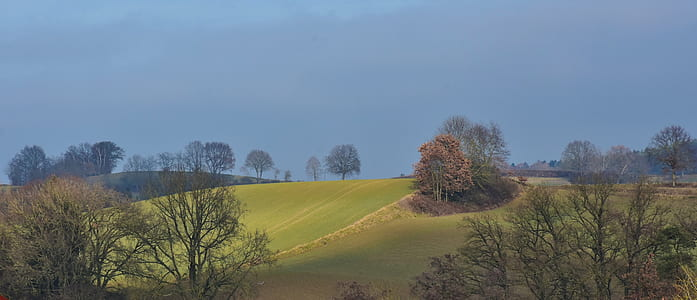 landscape photo of hill with trees