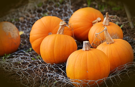 pumpkins on gray net