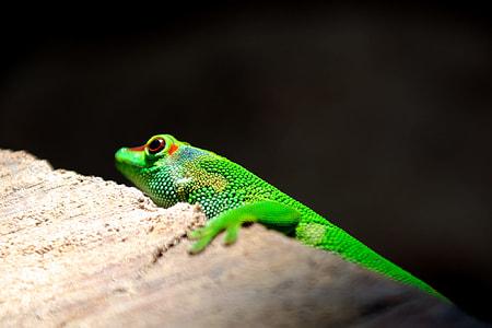 Green lizard on brown concrete wall