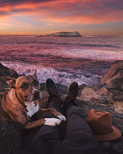 shallow focus photography of brindle boxer dog on seashore