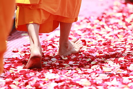 person stepping on red flower petals
