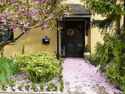 fallen sakura leaves near doorway