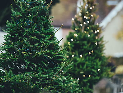 close up photography of Christmas tree