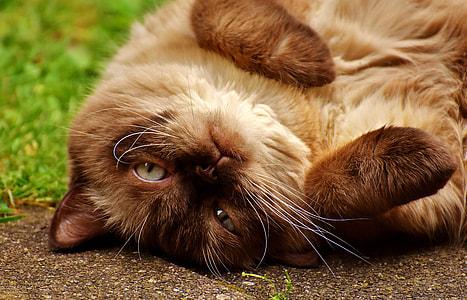 Siamese cat on ground