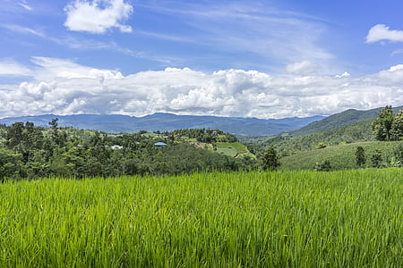 rice field and view of mountain