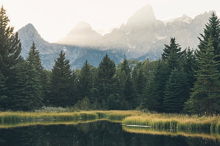 Landscape shot of lake, forest and mountains in the USA