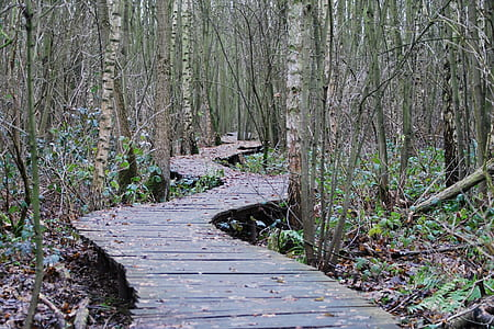 photographed of wooden bridge in forest