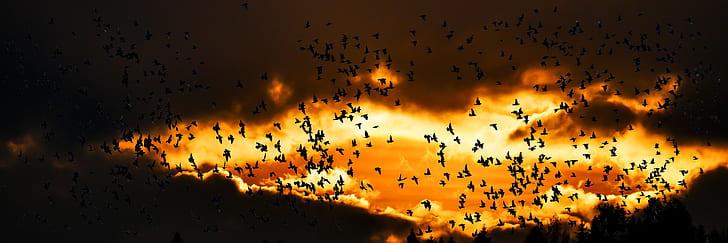 nature, animals, bird, migratory bird, fly, south