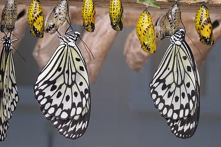 assorted-color butterflies
