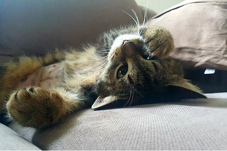 suilver Tabby kitten lying on gray surface