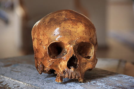 brown human skull on brown surface