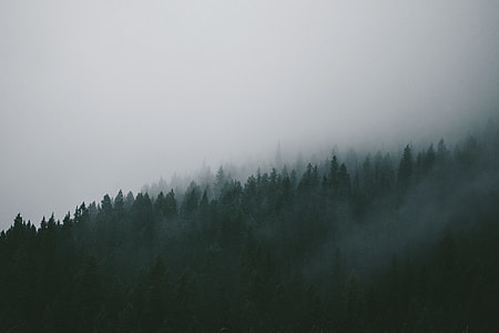 green tress covered with fog